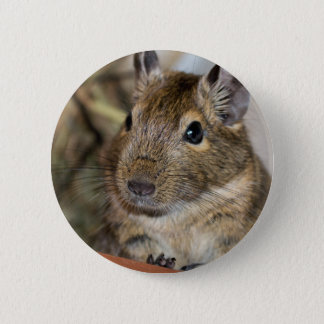 Cute Alert Degu Photograph 6 Cm Round Badge