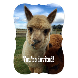 Cute Alpaca party invitation