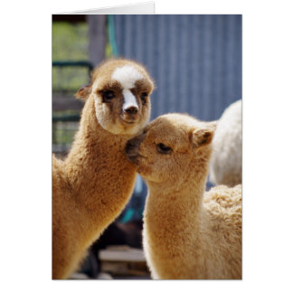 Cute Alpacas Note Card