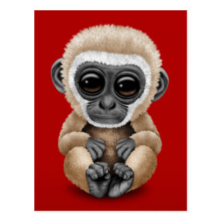 Cute and Curious Baby Gibbon on Red Postcard