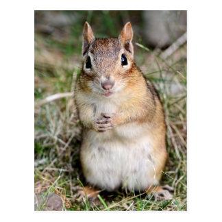 Cute and Friendly Chipmunk Postcard