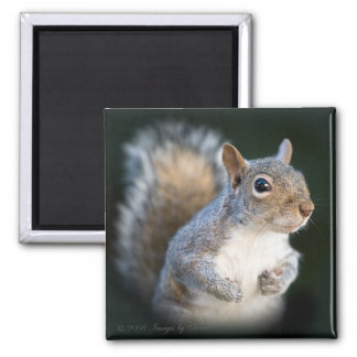 Cute and Funny Squirrel Magnet
