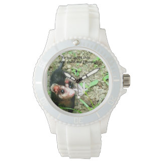 Cute Animal Possum Watch