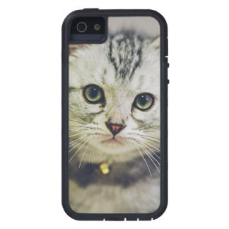 Cute As A Kitten Case For iPhone 5