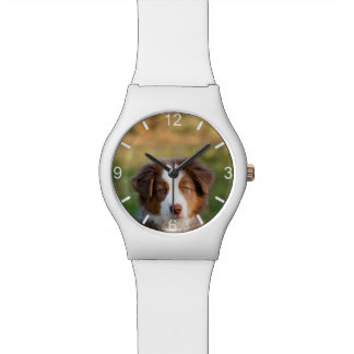 Cute Australian Shepherd Dog Puppy - dial-plate Watch