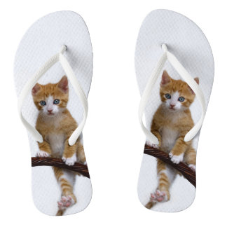 Cute Baby Cat Kitten Funny Gym Photo on - Thongs