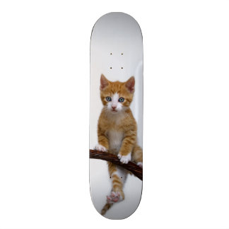 Cute Baby Cat Kitten Funny Gym Photo - Skate Board Deck