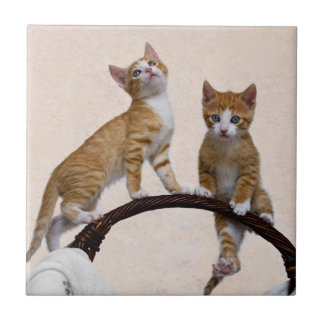 Cute Baby Cats Kittens Funny Playing Gym Photo - Tile