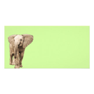 Cute Baby Elephant Picture Card