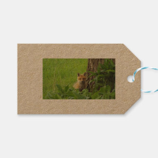 Cute baby fox in springtime photograph gift tags