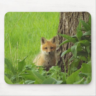 Cute baby fox in springtime photograph mouse pad