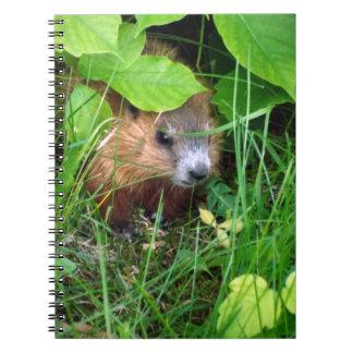 Cute Baby Groundhog Hull Canada Happy Springtime Notebook