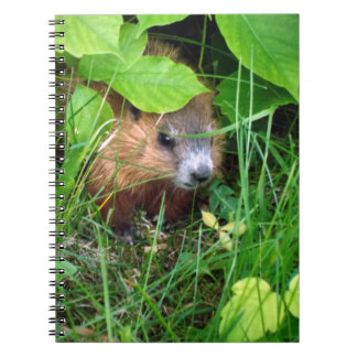 Cute Baby Groundhog Hull Canada Happy Springtime Spiral Notebook