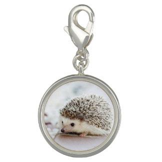 Cute Baby Hedgehog