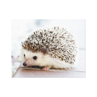 Cute Baby Hedgehog Canvas Print