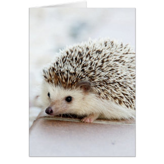 Cute Baby Hedgehog Card