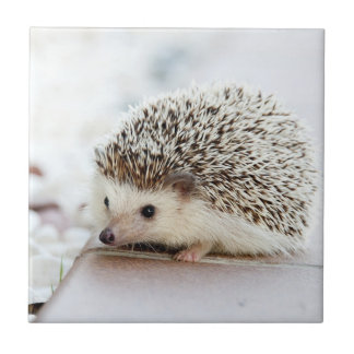 Cute Baby Hedgehog Ceramic Tile