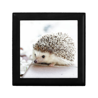 Cute Baby Hedgehog Gift Box