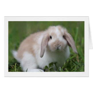 Cute Baby Holland Lop Rabbit - Baby Animals Card