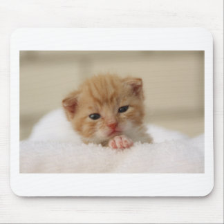 Cute baby kitten in white towel. mouse mats