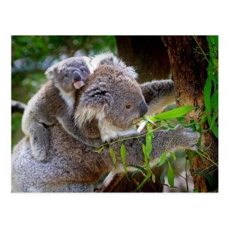 Cute baby koala bear with mom in a tree post cards
