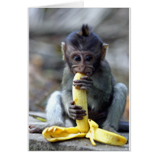 Cute baby macaque monkey enjoying banana card