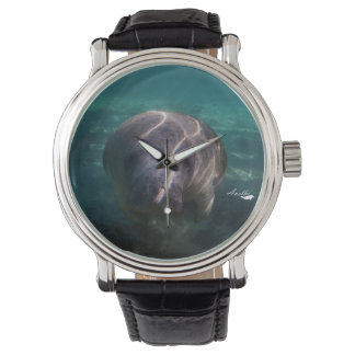 Cute baby manatee watches for men, women and kids