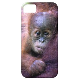 Cute baby orangutan in Sumatra iPhone 5 Case