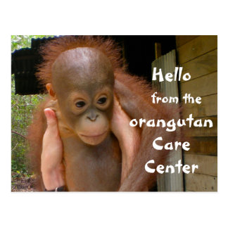 Cute Baby Orangutan Orphan Postcard