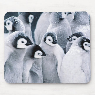 cute baby penguin penguins design mouse pad