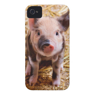 Cute Baby Piglet Farm Animals Babies iPhone 4 Case
