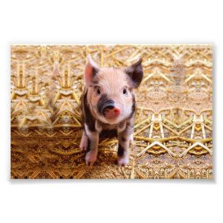 Cute Baby Piglet Farm Animals Babies Photo