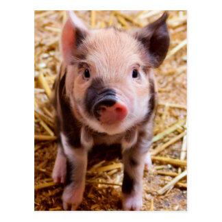 Cute Baby Piglet Farm Animals Babies Postcard