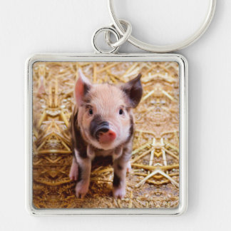 Cute Baby Piglet Farm Animals Babies Silver-Colored Square Key Ring