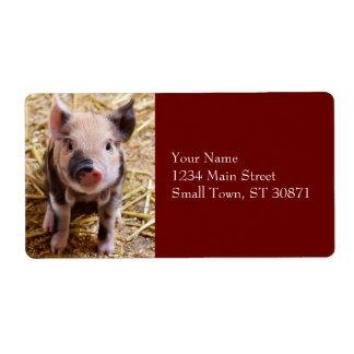 Cute Baby Piglet Farm Animals Barnyard Babies