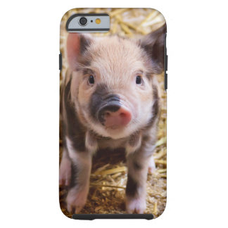 Cute Baby Piglet iPhone 6 Case
