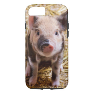 Cute Baby Piglet iPhone 7 Case