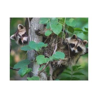 Cute Baby Raccoons Canvas Print