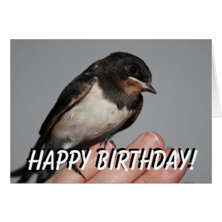 Cute baby swallow birthday card