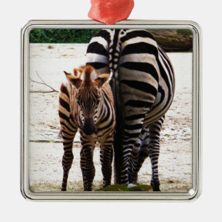 Cute Baby Zebra picture Silver-Colored Square Decoration