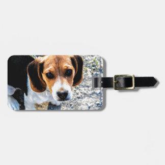 Cute Beagle Luggage Tag