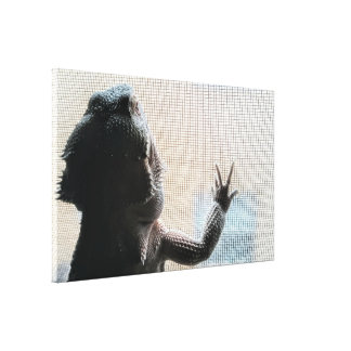 Cute Bearded Dragon at the Window Picture Canvas Print