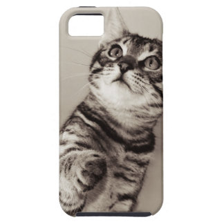 Cute Bengal Kitten Case For The iPhone 5