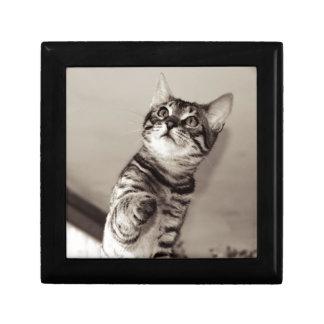 Cute Bengal Kitten Gift Box