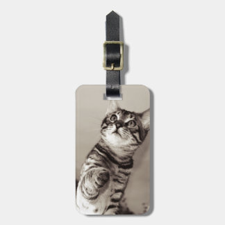 Cute Bengal Kitten Luggage Tag