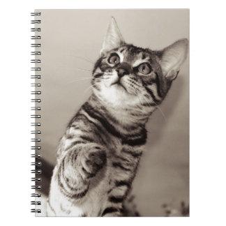 Cute Bengal Kitten Notebook