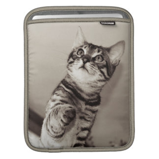 Cute Bengal Kitten Photo iPad Sleeve