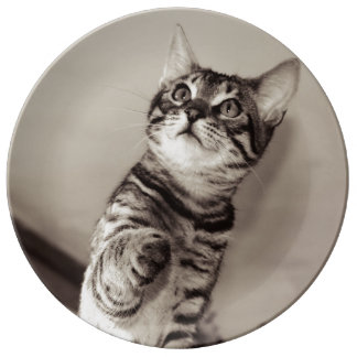 Cute Bengal Kitten Photo Plate