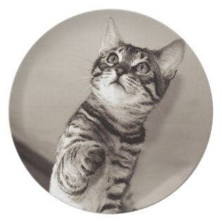 Cute Bengal Kitten Plate