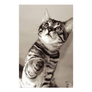 Cute Bengal Kitten Stationery